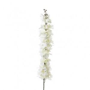 Rametto Speronella bianca (Delphinium fissum)